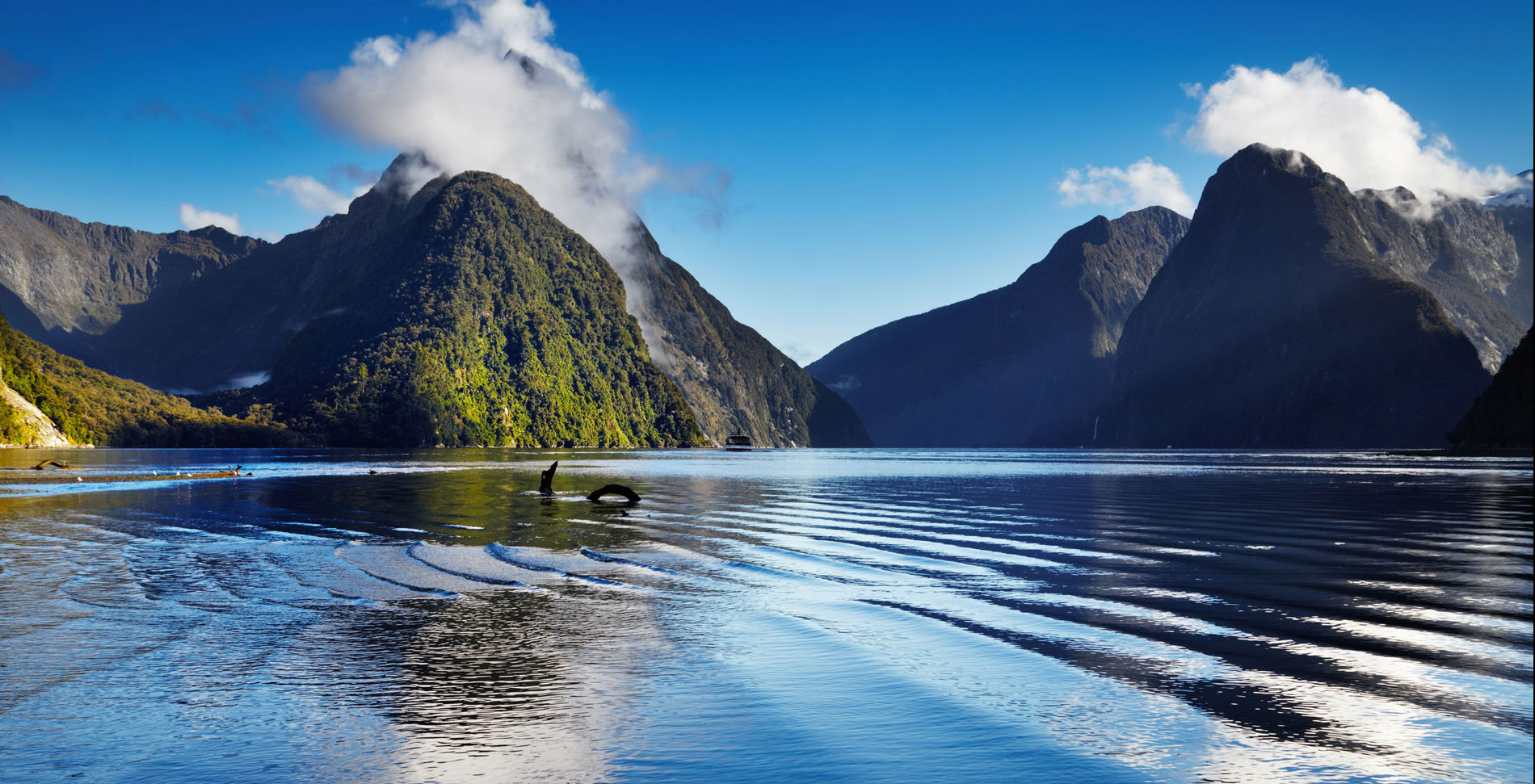Transfer Money to New Zealand