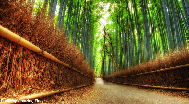 Arashiyama_Bamboo_Forest_Japan_Photo_By_amazing_Places