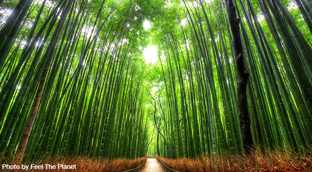 Arashiyama_Bamboo_Forest_Japan_Photo_By_Feel_The_Planet