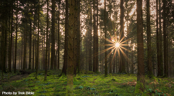 Black_Forest_Germany_Photo_By_TrekBible