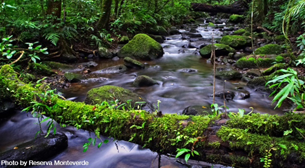 Monteverde_Cloud_Forest_Reserve_Costa_Rica_Photo_By_Reserva_Monteverde