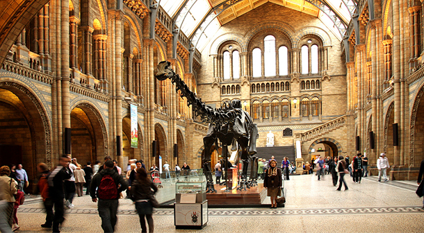 Natural_History_Museum_Google_Labelled_For_Reuse